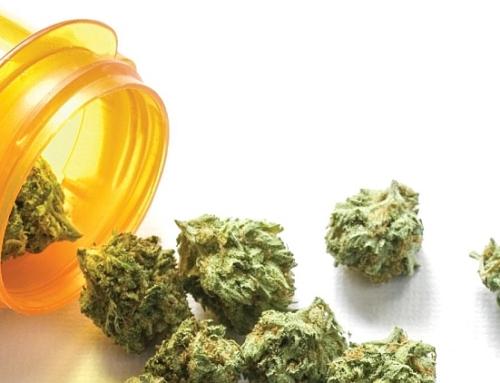 Léčebná síla konopí – co všechno umí léčebná marihuana